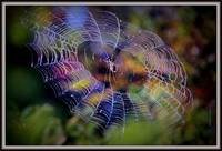 Purple web