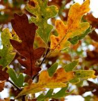 Autumn gallery