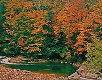 West Virginia Mountain Trout Stream
