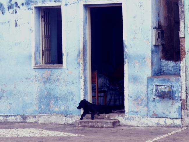 black dog blue house