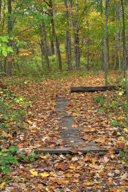 Fall Creek Gorge - Path (IMG_6427)
