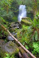 Quinault Rain Forest fall