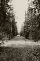 Path in the Woods - Sepia