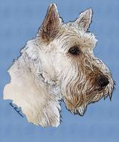 Scottish Terrier Wheaten