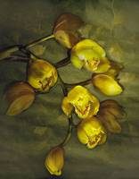 Yellow Cymbidium Orchids