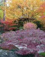 Autumn Shades of Purple by Carol Groenen