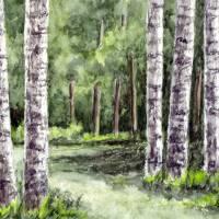 """""""Birch Tree Watercolor  Landscape"""" by waterart"""