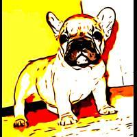 French Bulldog art Art Prints & Posters by RITMO BOXERS