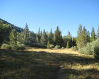 Rock Creek Meadow