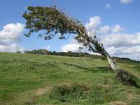 The Bending Tree on Omaha Beach in Normandy by Carol Groenen