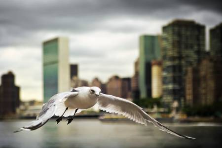 NYC Gull by Jorg Dickmann