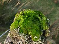 Moss on fencepost