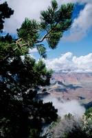 Grand Canyon View, Dee Oberle