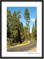 Yosemite's winding roads