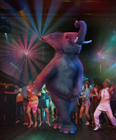 Disco Elephant by John Lund