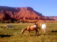 Sorrel Horses & The Ranch