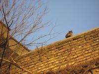 Cat in high places