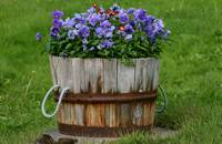 a barrell of flowers