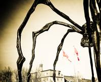 Arachnophobia in the Nations Capital....eeeek!