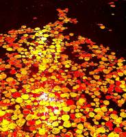 aspen leaves on autumn water