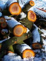 snow cut logs