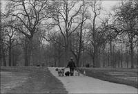 Hyde Park, Winter, London