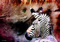 Zebra Number One