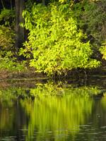 Reflection In Green