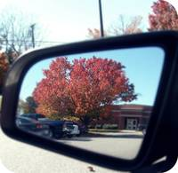 Rearview Reflection.