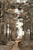 forest path dalbynorth yorkshire