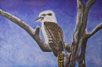 The kookaburra