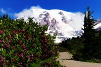 Stroll through Paradise on Mt Rainier