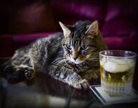 Cat with Scotch on the Rocks