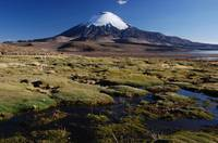 Morning Parinacota
