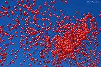 Milion baloons in the sky.