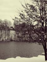 The Tree, The Oswego River, and the House