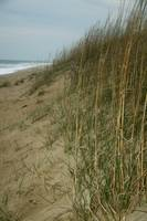 Sand Dunes and Sea Grass