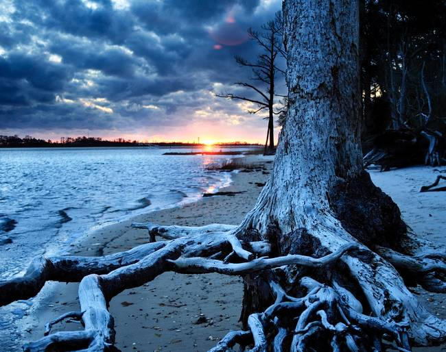 Dark Blue and Black Sunset Over Dead Tree Roots