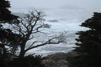 Point Lobos Grey Mist