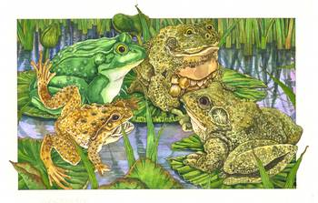 Frogs & Toads by artist Wendy Edelson. Giclee prints, art prints, animal art, frog art, three frogs and a toad on lilypads in a pond; from an original illustration
