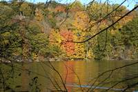 Foliage by the Lake