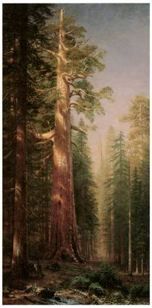 Albert Bierstadt's The Great Trees