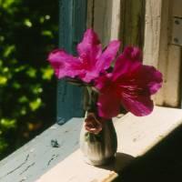 Flower in window Art Prints & Posters by Doug Allen