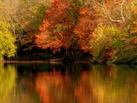 Autumn Relections  Shimmer