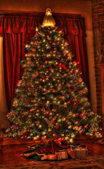 Christmas Tree (IMG_6603+)