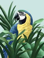 Blue and Gold Macaw Art