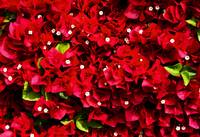 Great Red Wall