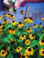 Black-Eyed Susans at The Bag Factory