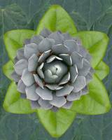 flower mandala green