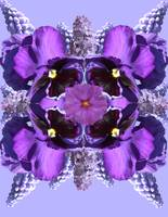 flower mandala purple